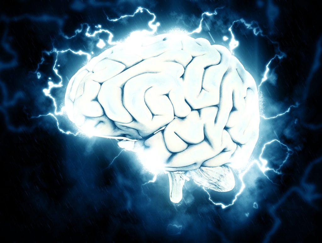 脳(脳のゴールデンタイム)の写真
