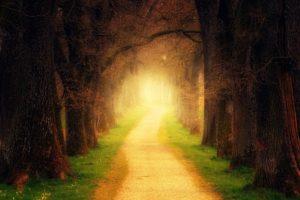 森の中の光の道の写真