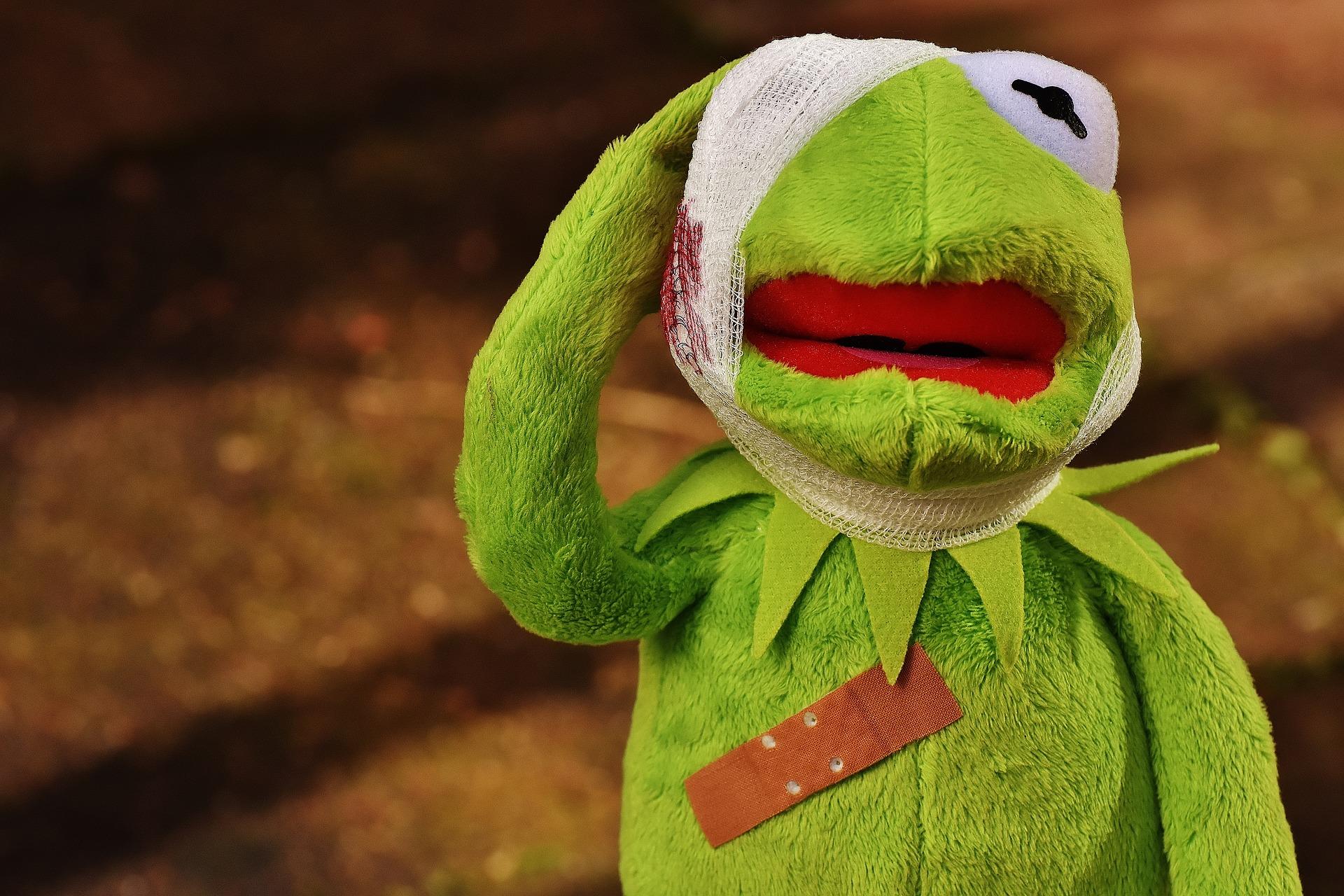 傷を負ったカエルの写真